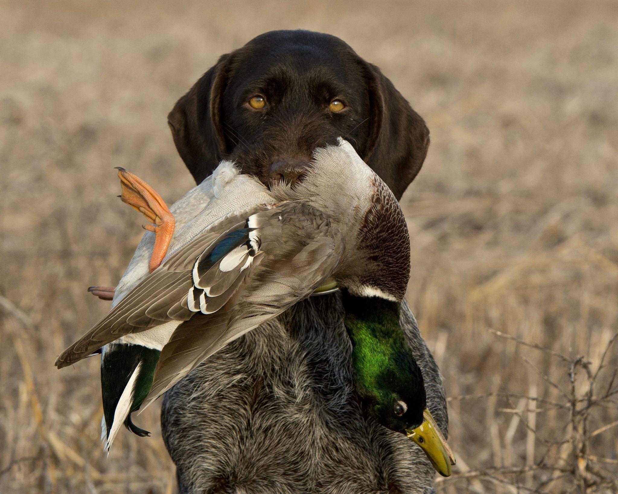 Best Duck Hunt Best Duck Calls