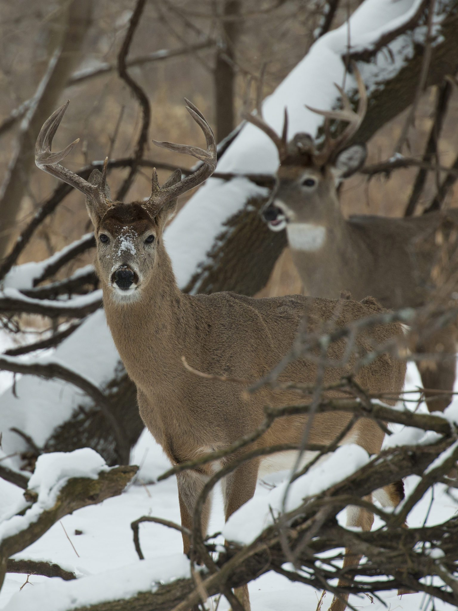 Where to Hunt Whitetail Deer