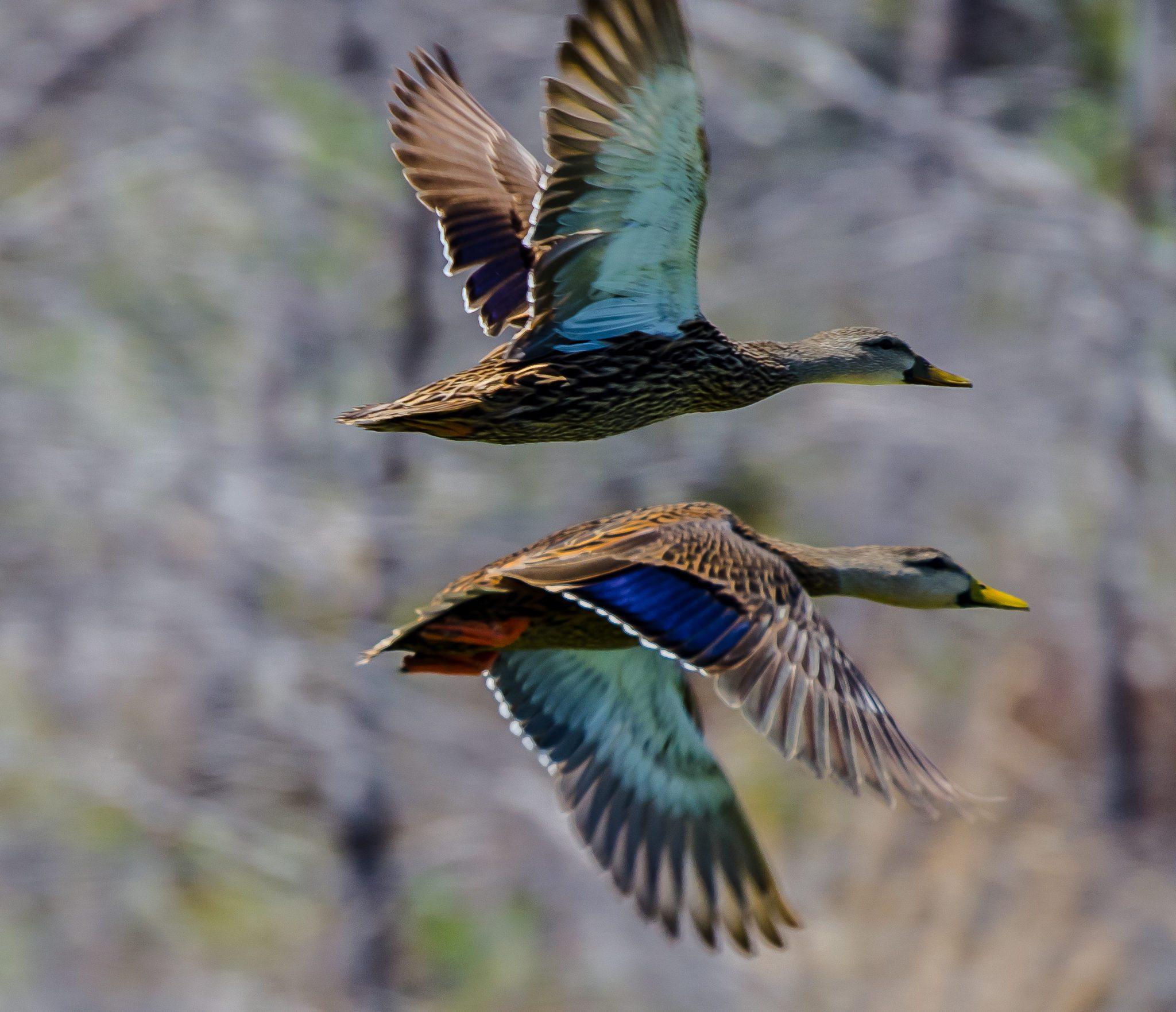 Best Orange Reed Duck Calls
